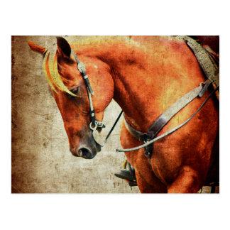 Western-Pferd Postkarte