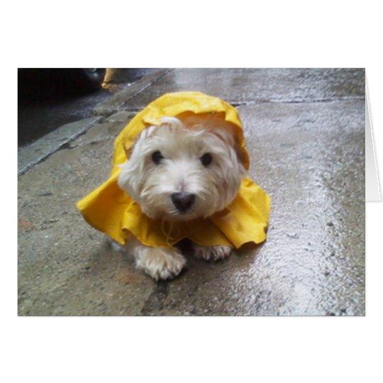 Westie im gelben Regen-Mac! Grußkarte