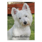 Westie, Westhochland-Terrier-Hundegeburtstagskarte Karte