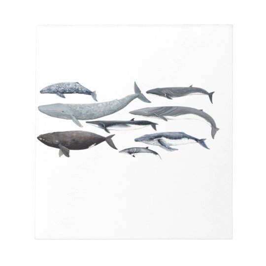 Whales and right whales notizblock