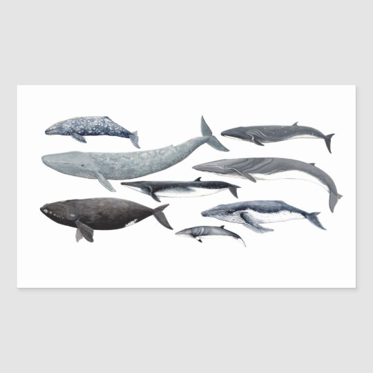 Whales and right whales rechteckiger aufkleber