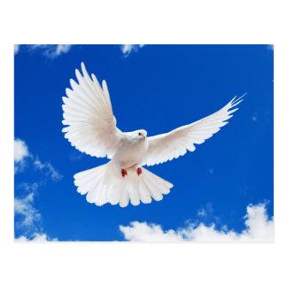 White Dove Postkarte