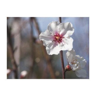 White flower in natural light leinwanddruck
