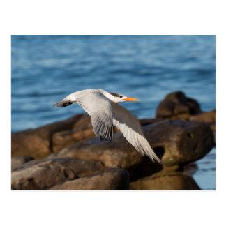 Wie die Seeschwalbe fliegt Postkarte