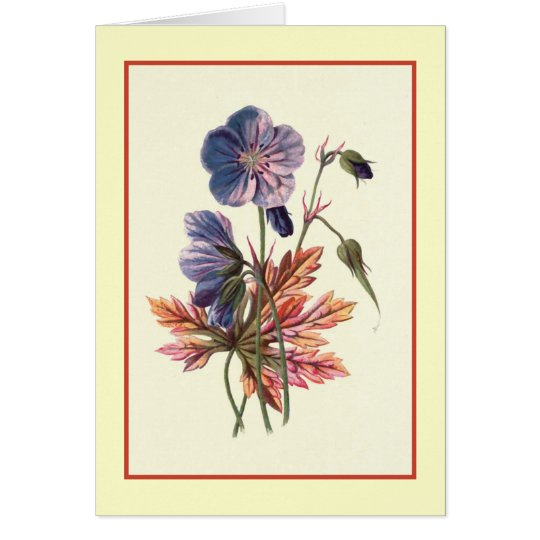 """""""Wiese Cranesbill"""" botanische Illustration Karte"""