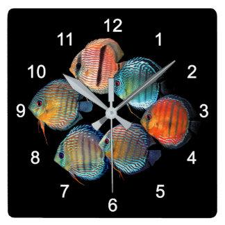 Wild Discus fish Quadratische Wanduhr