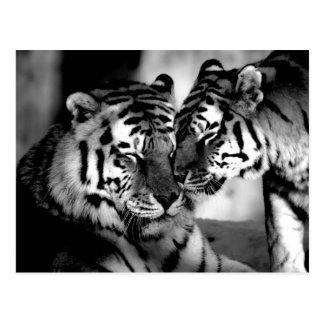 Wild lebende Tiere, fantastischer Tiger Postkarte