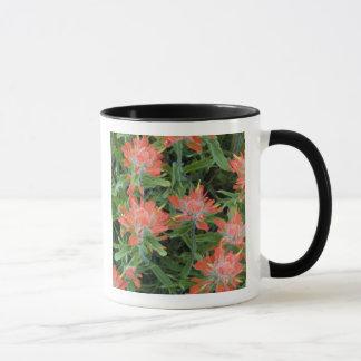 Wildblumen des indischen Malerpinsels in den Tasse