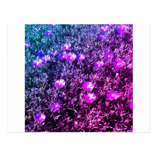 Wildblumen Postkarte