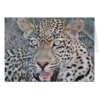 Wilde afrikanische Leopard-Augen Karte