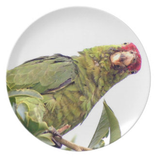 Wilde Amazonas-Papageien-Vogel-Tier-wild lebende Essteller
