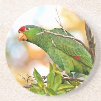 Wilde Amazonas-Papageien-Vogel-Tier-wild lebende Getränkeuntersetzer