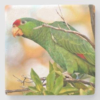 Wilde Amazonas-Papageien-Vogel-Tier-wild lebende Steinuntersetzer