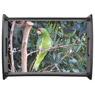 Wilde Amazonas-Papageien-Vogel-Tier-wild lebende Tablett