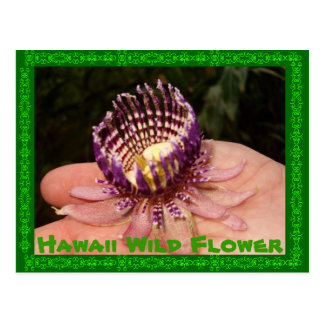 Wilde Blume Hawaiis Postkarte