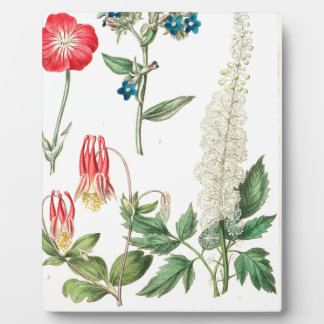 Wilde Blumen-Vintager botanischer Druck Fotoplatte