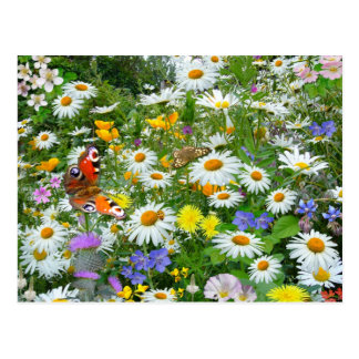 Wilde Blumen-Wiese Postkarte