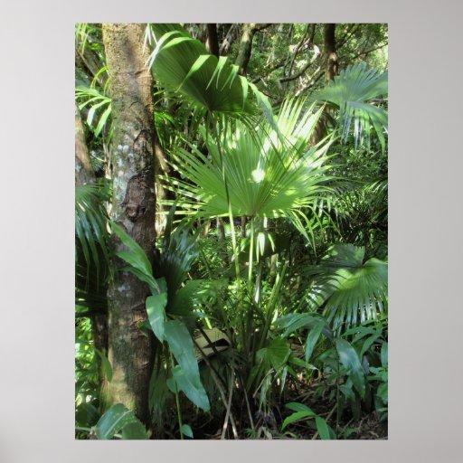 Wilde hawaiische Palme Posterdruck