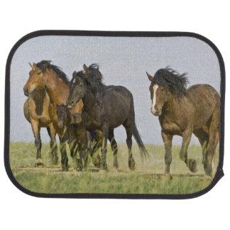 Wilde PferdeEquus caballus) wilde Pferde 3 Autofußmatte