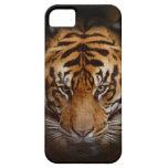 Wilde Tiger-Tier-schöne Kunst beweglicher iPhone Hülle Fürs iPhone 5