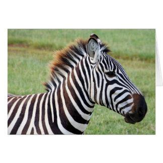 Wilder afrikanischer Zebra Karte