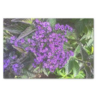 Wilder lila lila Busch des weisen Grüns des Seidenpapier
