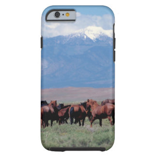 Wilder Pferdheraus WestiPhone 6 Fall Tough iPhone 6 Hülle
