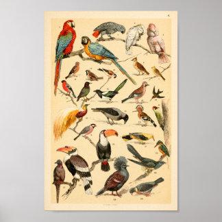 Wilder Vogel-Sammlungs-Papageien Tucan Druck Poster