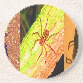 Wildes Costa Rica - Spinnen, Schaben und Insekten Sandstein Untersetzer