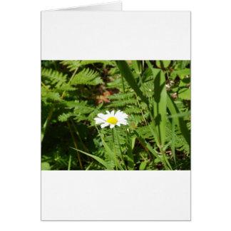 Wildes Gänseblümchen mit Farnen Karte