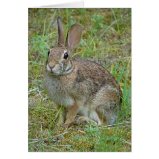 Wildes Kaninchen-Ostwaldkaninchen-Kleid und Karte