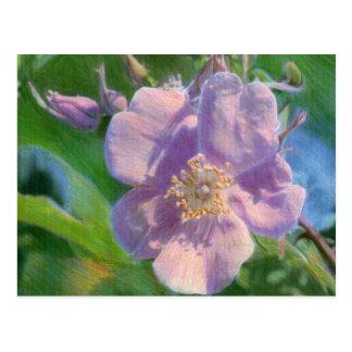 Wildes Rosen-Mischmedium-Zeichnen Postkarte