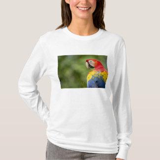 Wildes Scharlachrot des Macaw, Regenwald, Costa T-Shirt