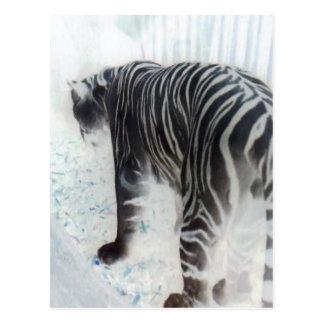 Wildes Tier des weißen Tigers Postkarte