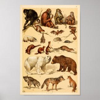 Wildes Tier-Sammlungs-Bärn-Wolf-Affe-Druck Poster