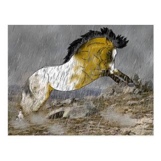 Wildes Wildlederappaloosa-Pferd Postkarte