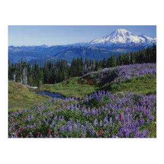 Wildnis USA, Washington Mt. Adams, Wiesen Postkarte