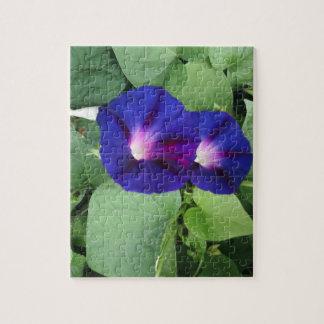 Winden-Blume