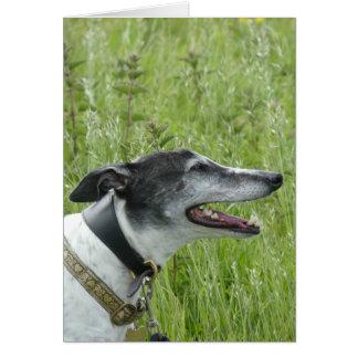 Windhund-Fotokarte (p377) Mitteilungskarte
