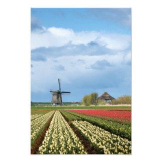 Windmühlen- und TulpelandschaftsFotodruck Fotodruck