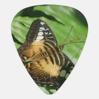 Winged Schmetterling Plektron