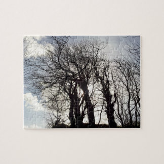 Winter-Bäume entlang einem Land-Weg Cornwall