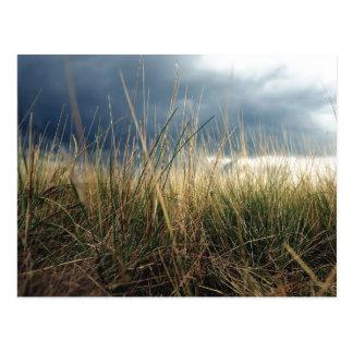 Winter-Gras Postkarte