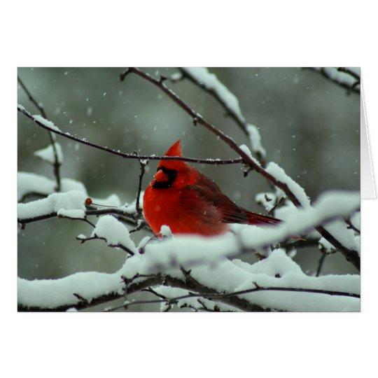 Winter-Kardinal - besonders angefertigt Mitteilungskarte