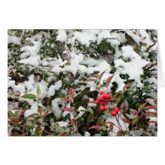 Winter-Stechpalme mit Schnee Karte