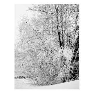 Winter-Weiß-Postkarte Postkarte