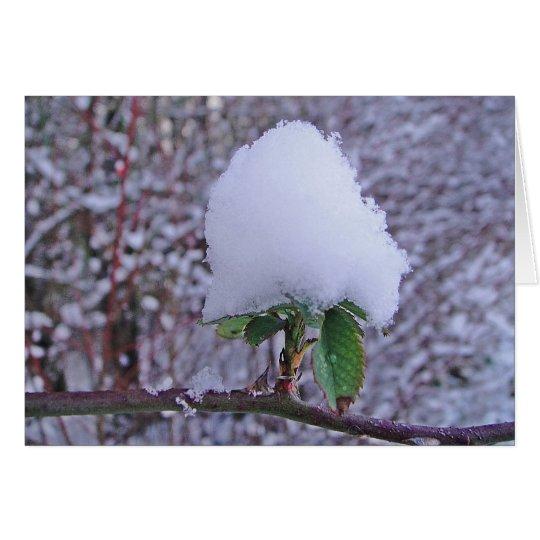 Wintergrusskarte hübsche Schneeplfanze, blanko Karte