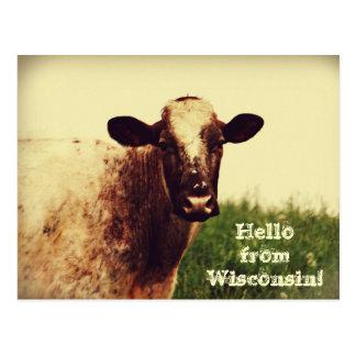 Wisconsin-Kuh-Foto-Postkarte Postkarte