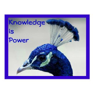 Wissen ist Powerpostkarte Postkarte