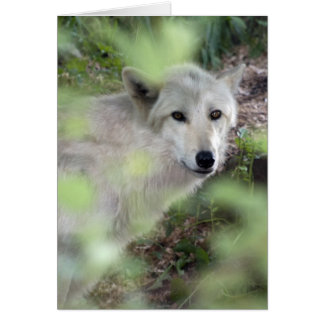 Wolf-Charme Karte